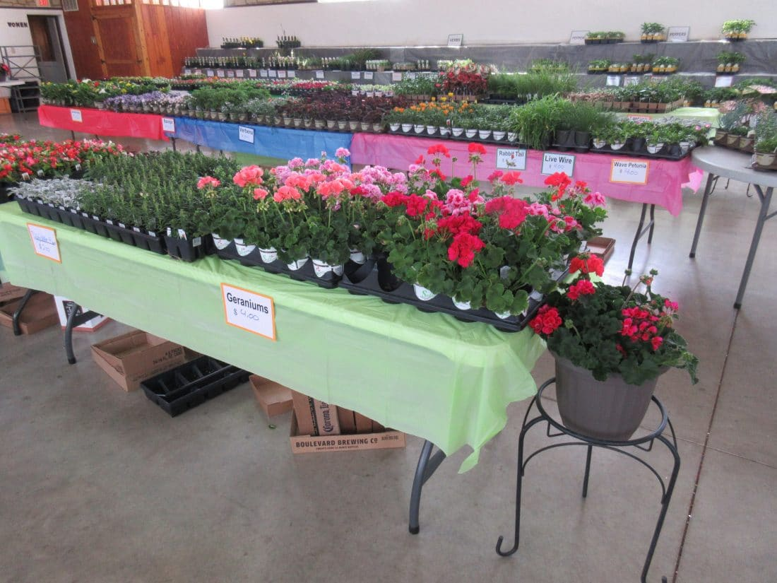 Table of plants for sale
